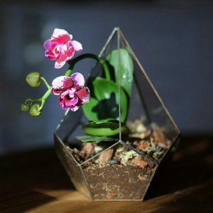 флорариумы в Казани
